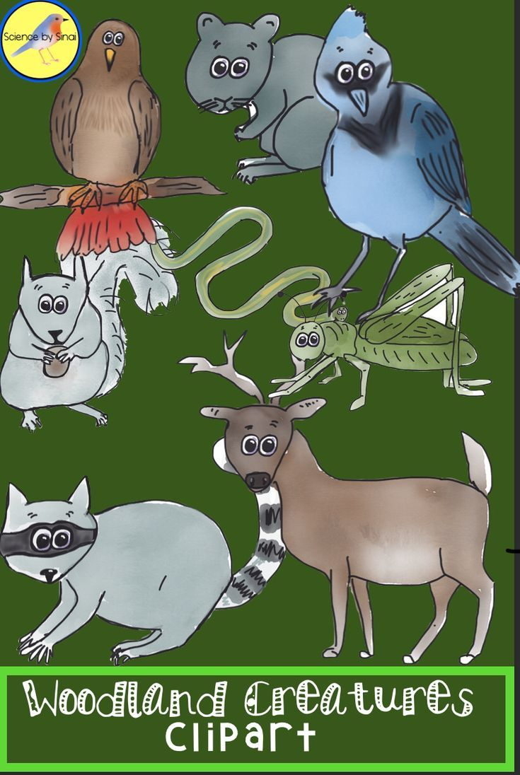 Whimsical Woodland FOREST ANIMALS CLIPART for Personal or.