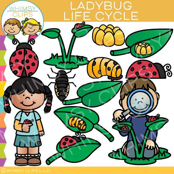 Ladybug Life Cycle Clip Art.