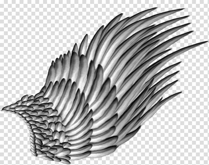 Feathered Wings, gray wing illustration transparent.