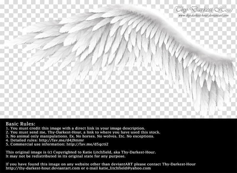 Winged Perfection White, white feather wing advertisement.