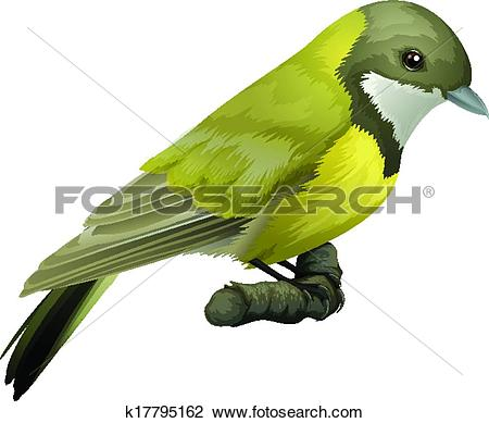 Clipart of Australian Golden Whistler k17795162.