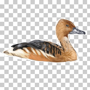 23 whistling Duck PNG cliparts for free download.