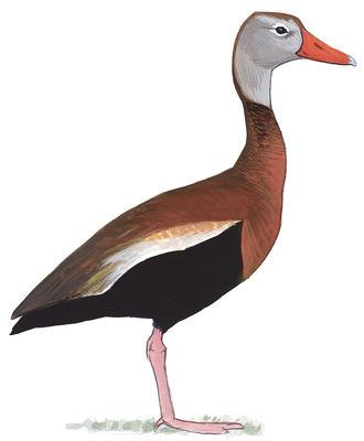Audubon Washington.