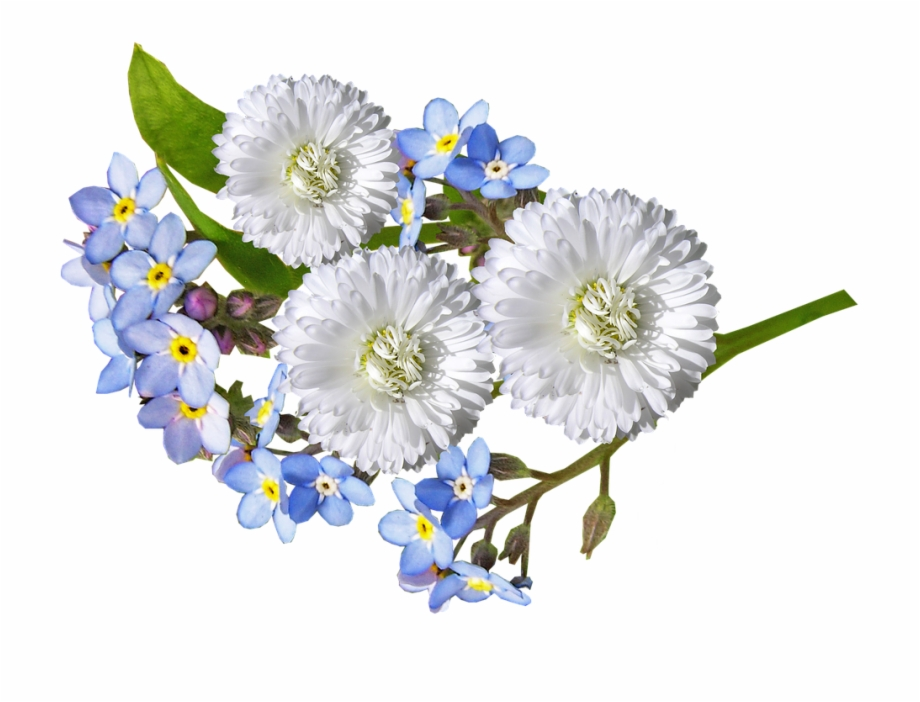 Free White Daisy Png, Download Free Clip Art, Free Clip Art.