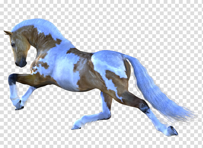 Horse , white and brown horse transparent background PNG.