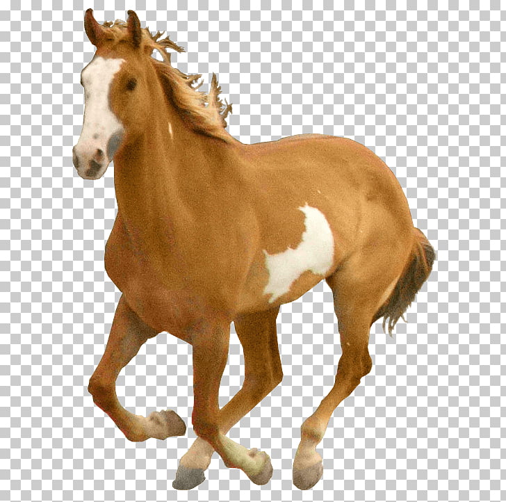 Horse Computer file, Horse , brown and white horse PNG.