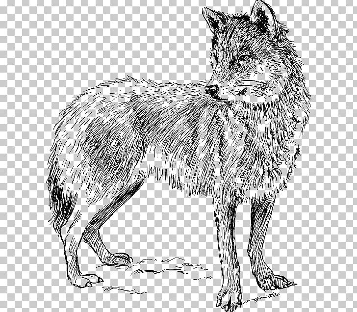 Coyote Arctic Wolf Drawing PNG, Clipart, Arctic Wolf, Black.