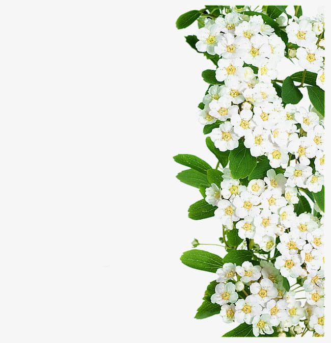 White Flowers Green Leaves PNG, Clipart, Flowers, Flowers.