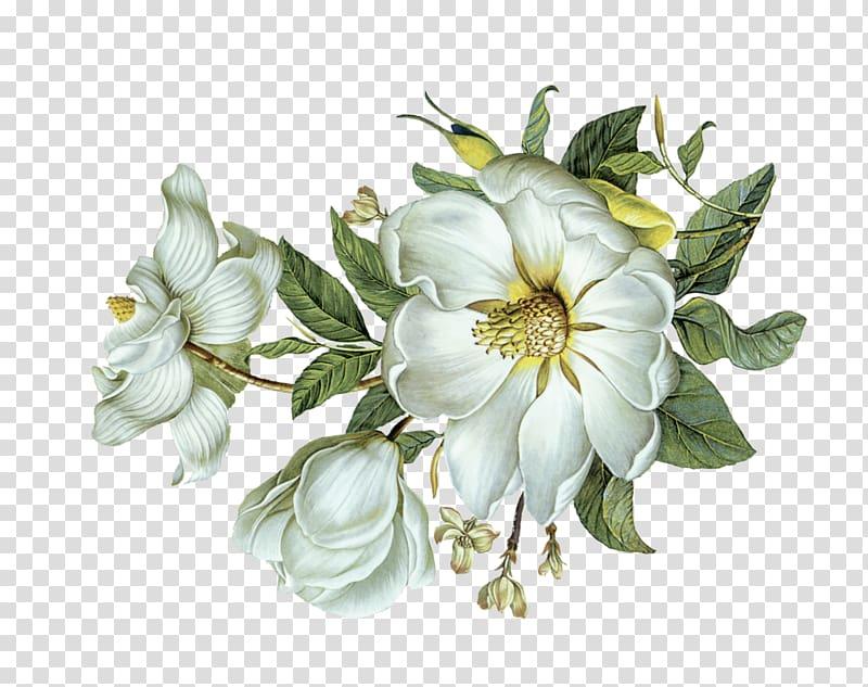 White flowers illustration, Flower Green Leaf Light, White.