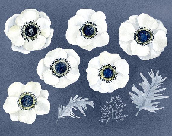 Watercolor Flowers Clipart White Anemone Aquarelle Digital.