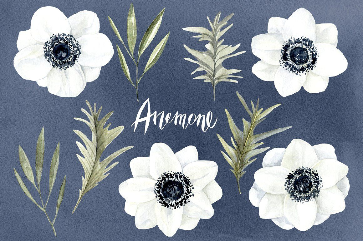 Watercolor anemone white flowers.