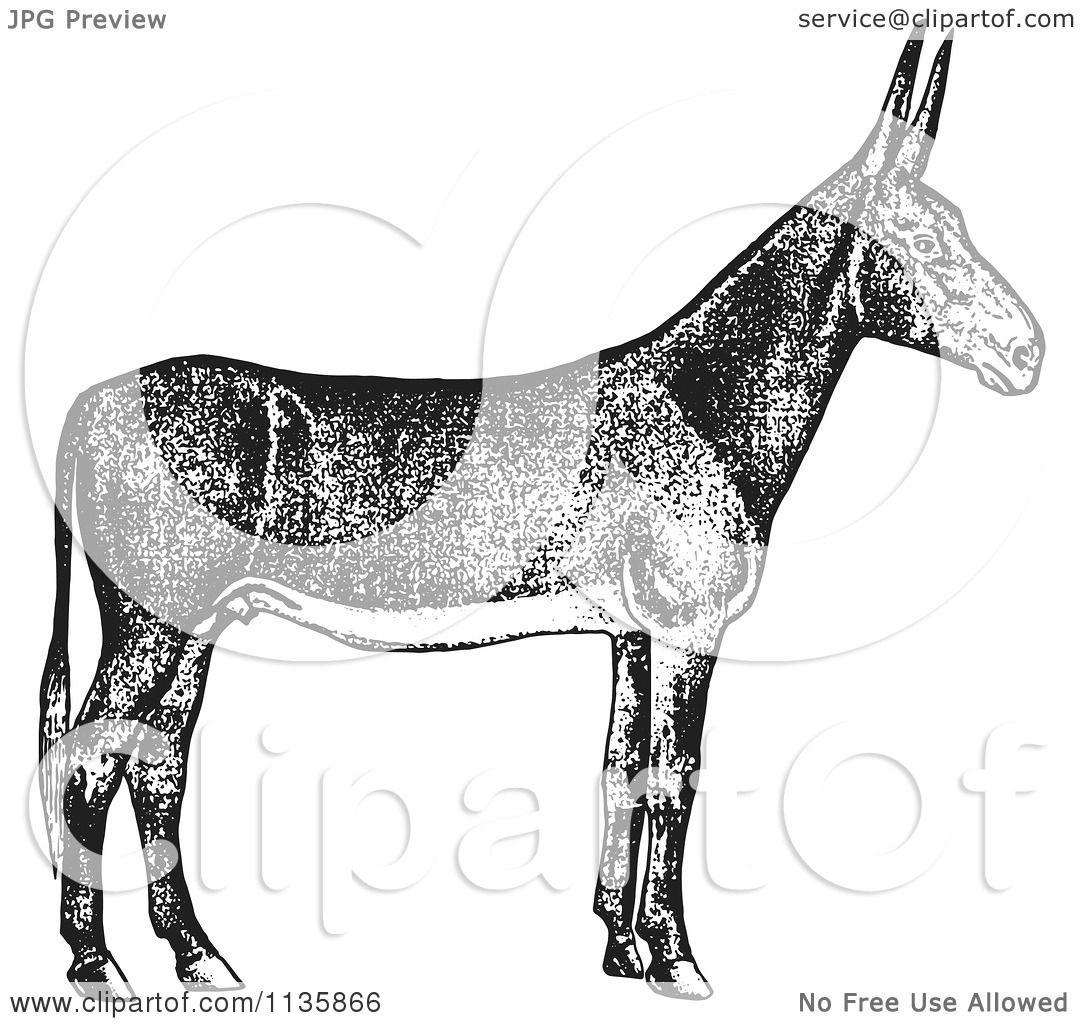 Clipart Of A Retro Vintage Poitou Donkey Ass In Black And White.