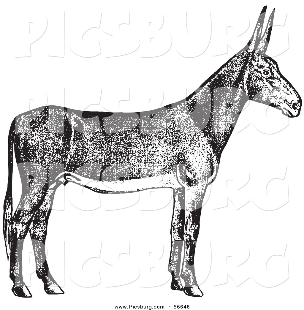 Clip Art of an Old Fashioned Vintage Poitou Donkey Ass in Black.