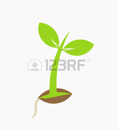 12,690 White Bean Stock Illustrations, Cliparts And Royalty Free.