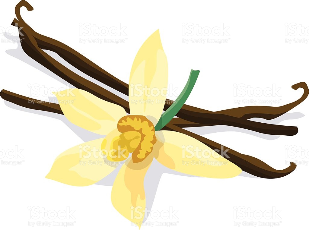 Vanilla Bean And Flower On White Background stock vector art.