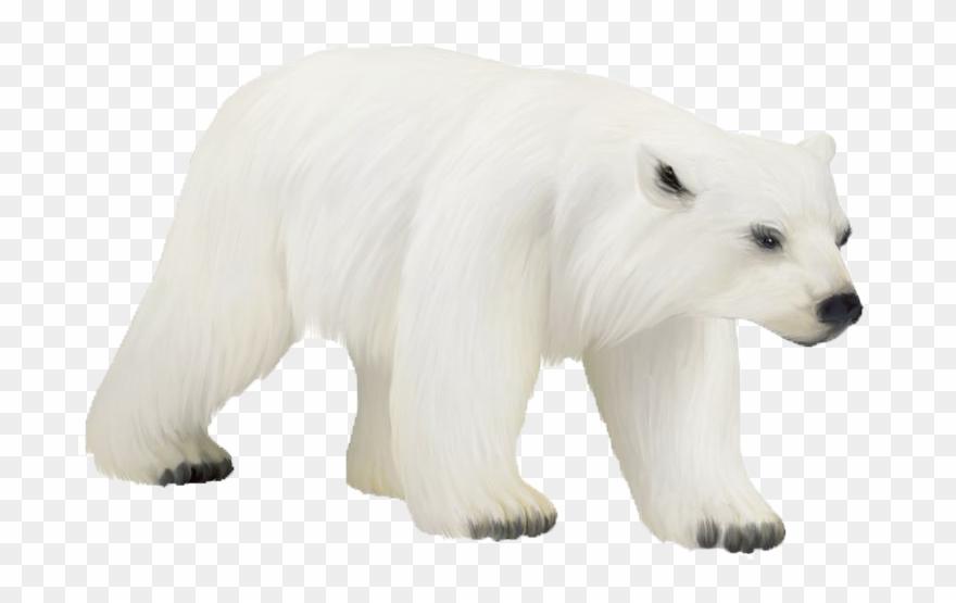 Polar Bear Png Photos.