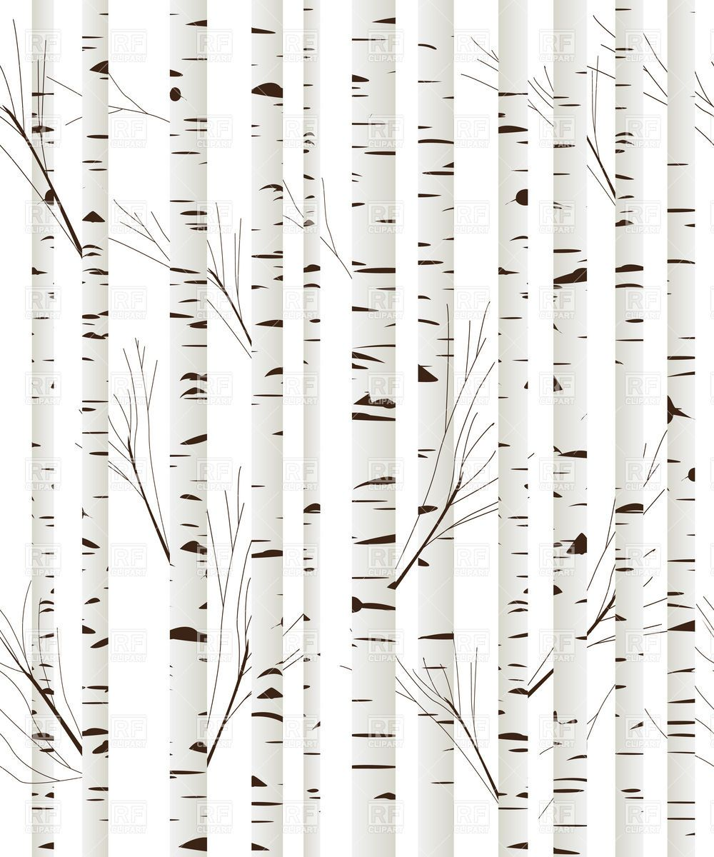 Birch wood trees background Vector Image.
