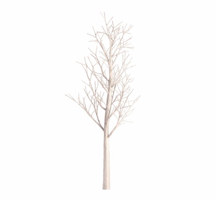 White Birch Tree Transparent White Birch Images Pluspng.