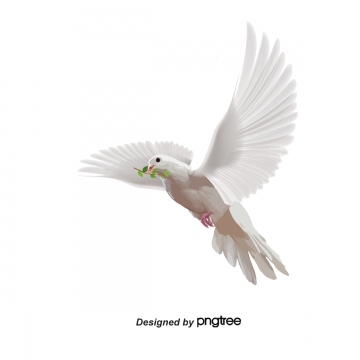 Bird PNG Images, Download 16,606 PNG Resources with Transparent.