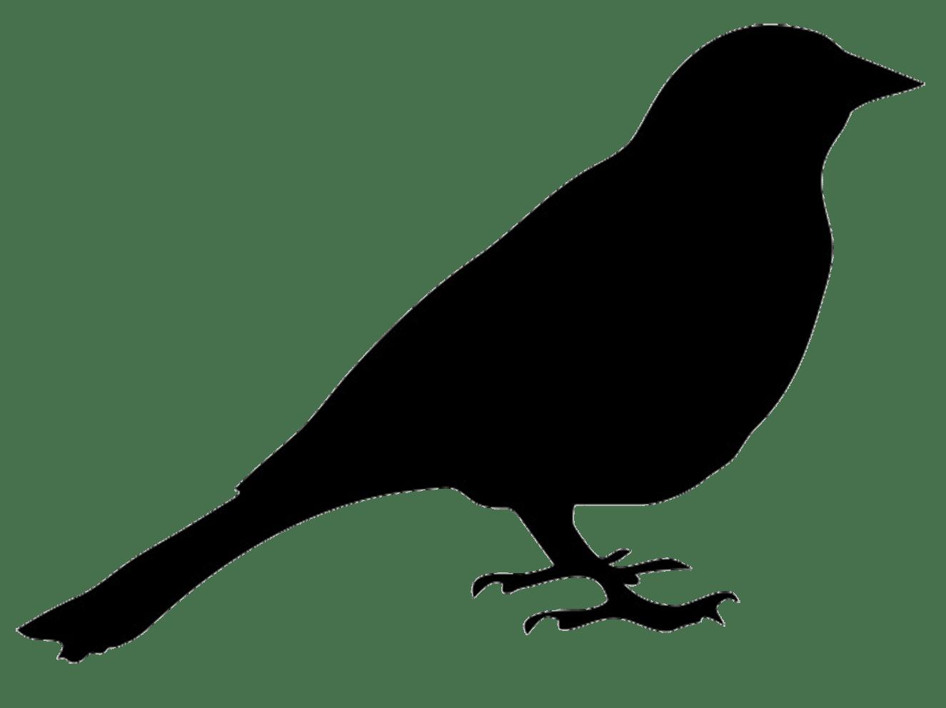 Bird Silhouette Drawing Clip art.