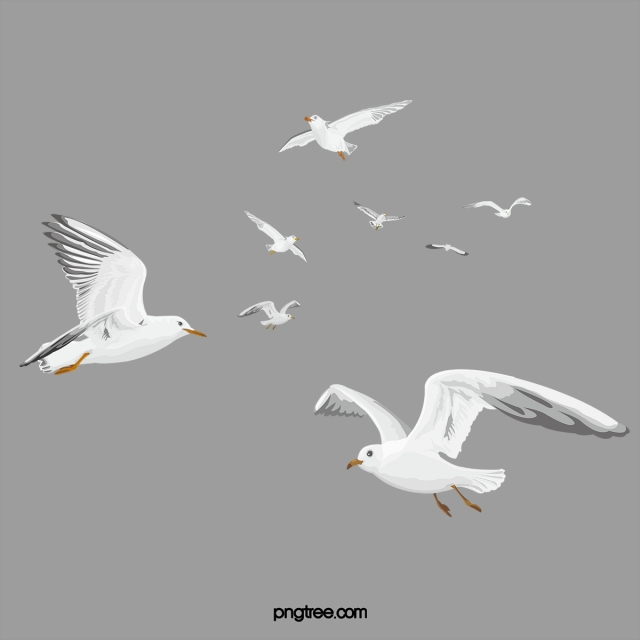 White Simple Birds Flying Material, White, Simple, Birds PNG Image.