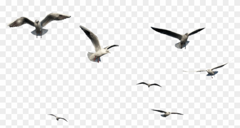 Free Png Download Flying Bird Bird Png Images Background.