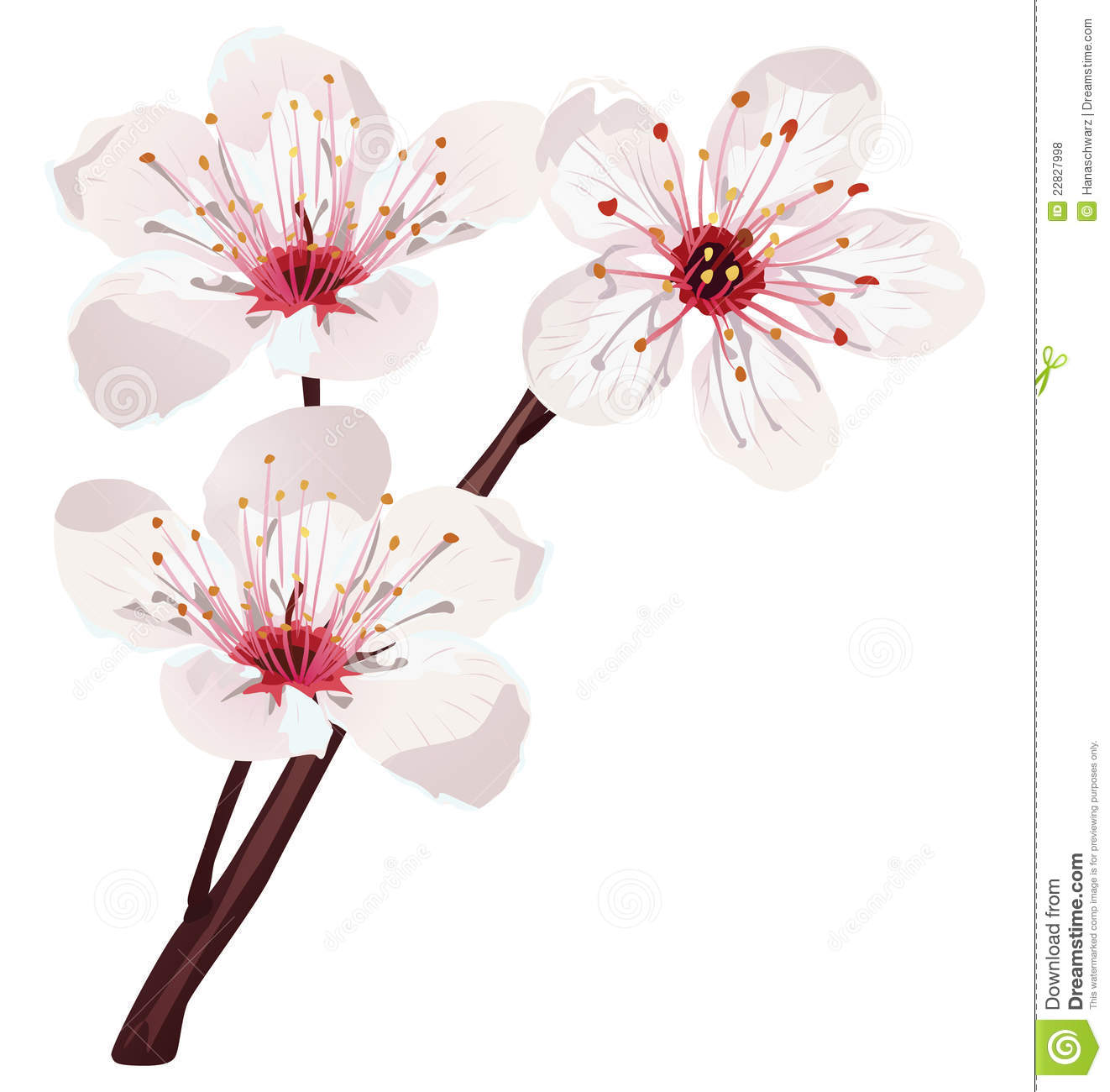 Download free cherry blossom clipart.