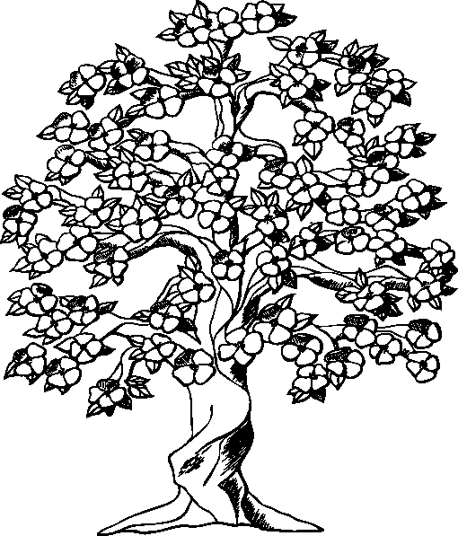 cherry blossom coloring pages white blossom clipart clipart kid.