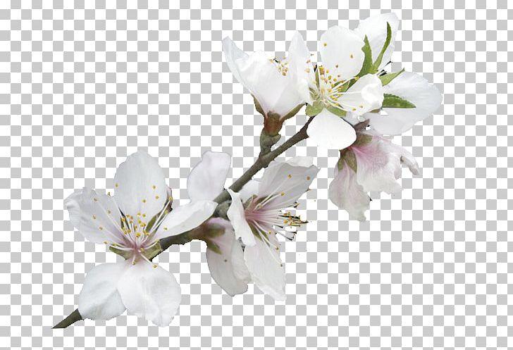 PNG, Clipart, Background White, Black White, Blossom, Branch, Bu1ed9.