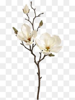 White Flowers, Creative Flowers, Flower Decoration, Fresh PNG.