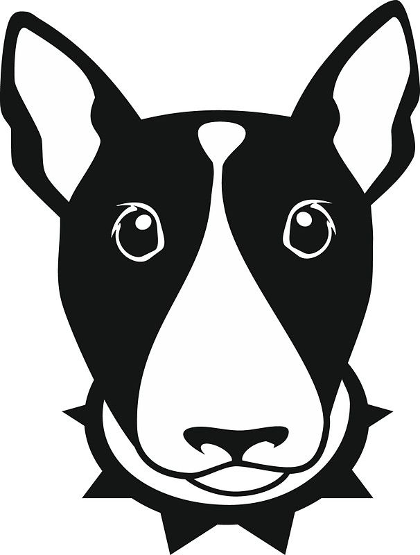Black and white dog bull terrier in a strict collar.