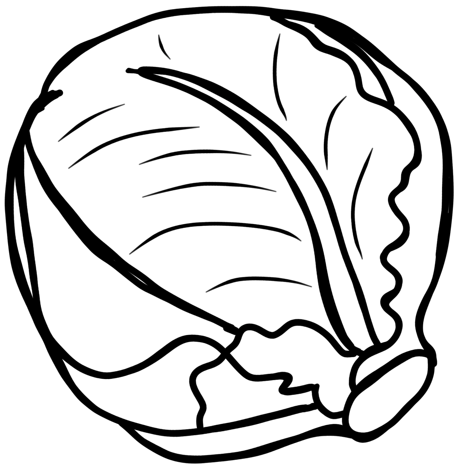 Cabbage Black And White Clipart.