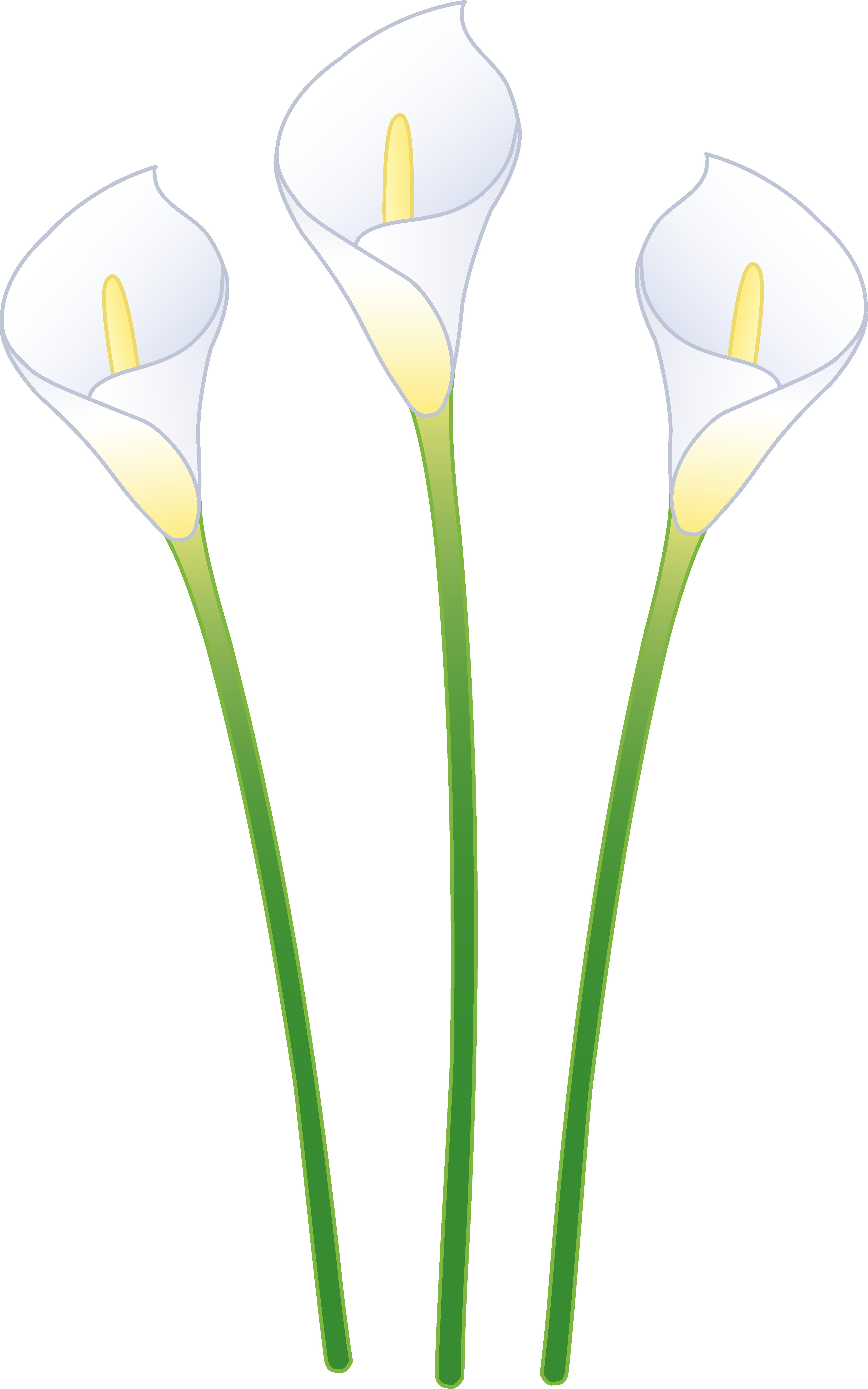 Three White Calla Lilies.