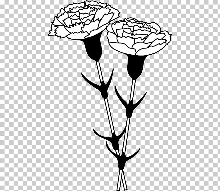 Black and white Carnation Monochrome painting , carnation.