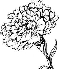 Carnation Flower clip art.