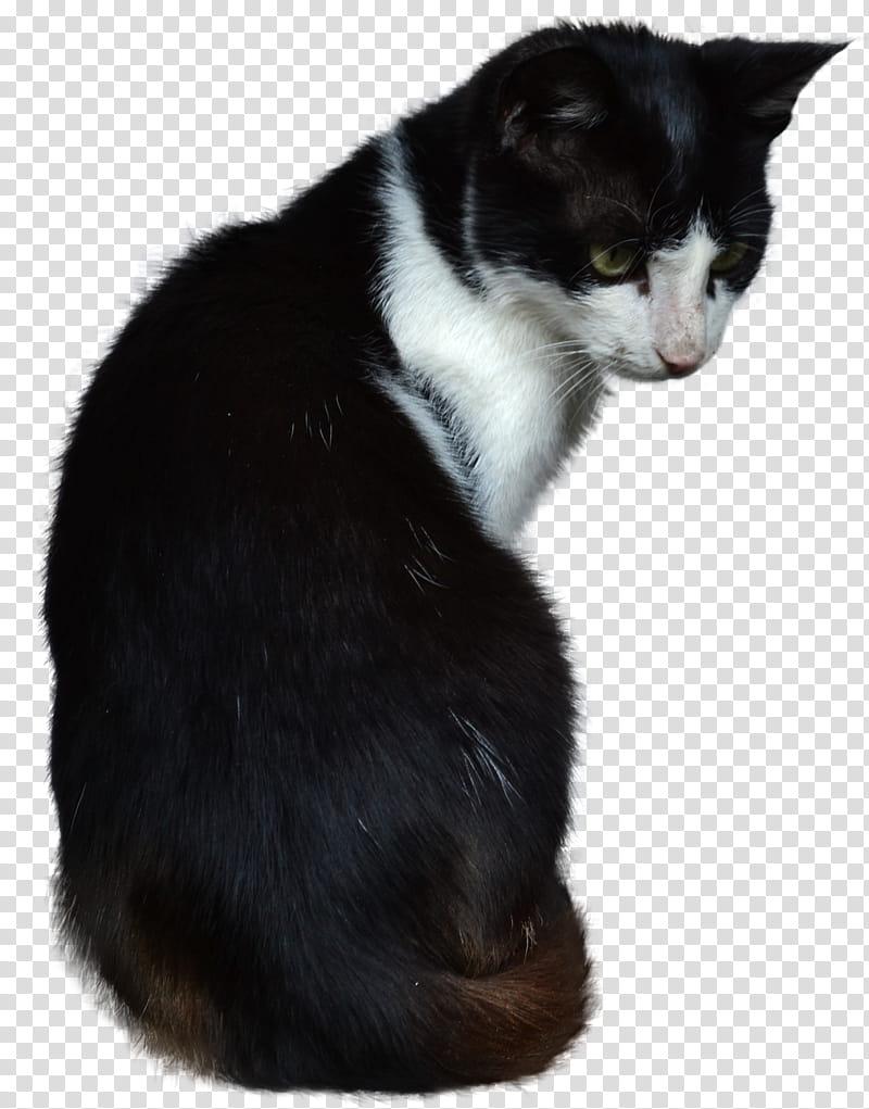 Cat, short.