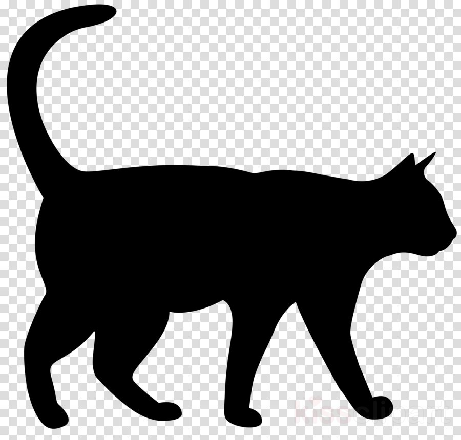 cat small to medium.