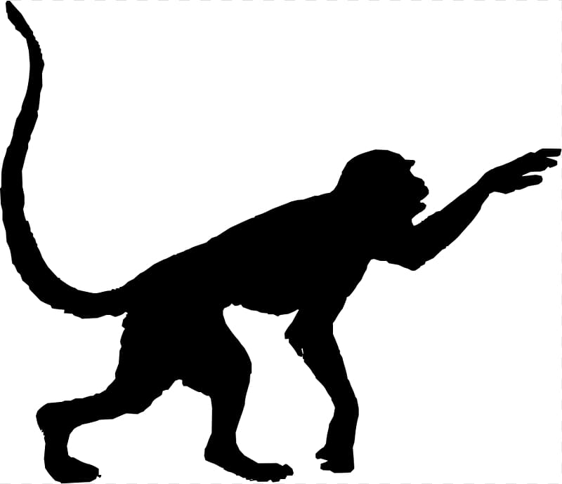 Spider Monkey PNG clipart images free download.