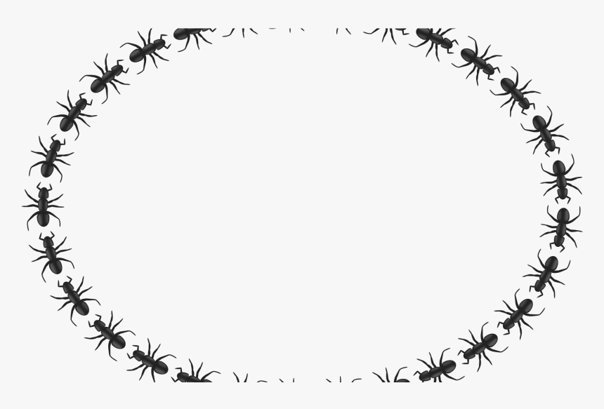 Transparent Ant Clipart.