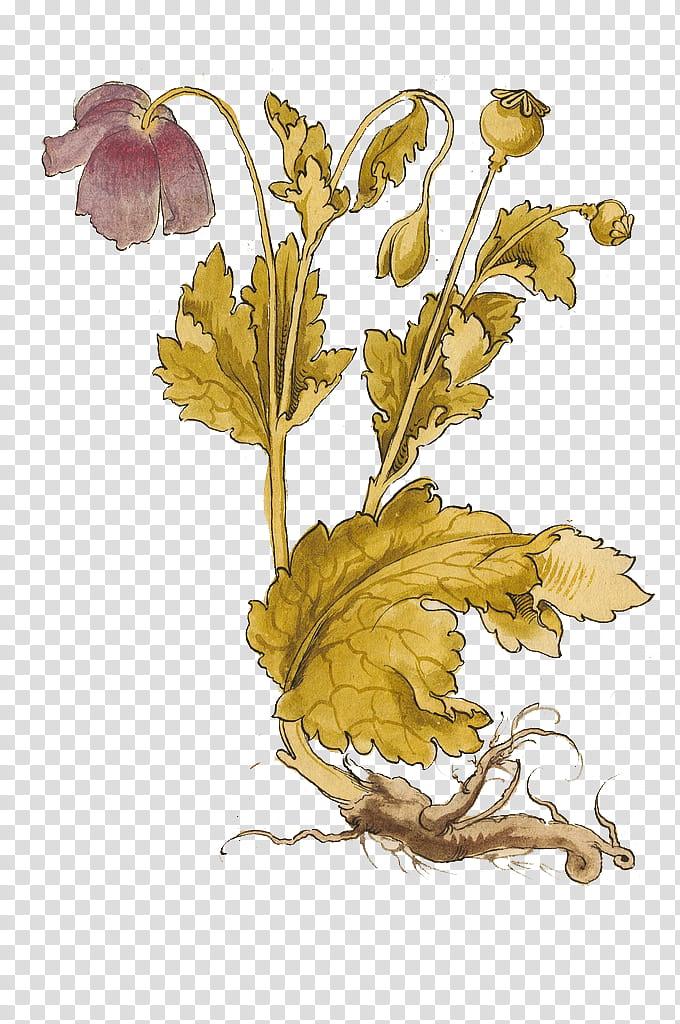 Plant, yellow and purple flower illustration transparent.