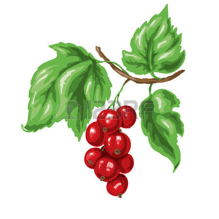 974 White Currants Stock Illustrations, Cliparts And Royalty Free.