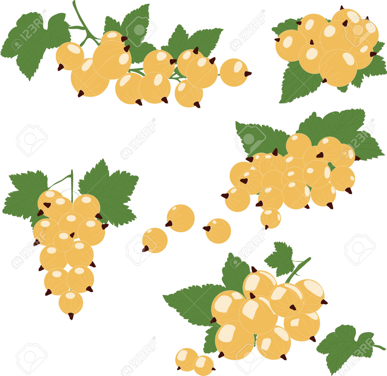 White Currant Cluster With Green Leaves. Vector Illustration.