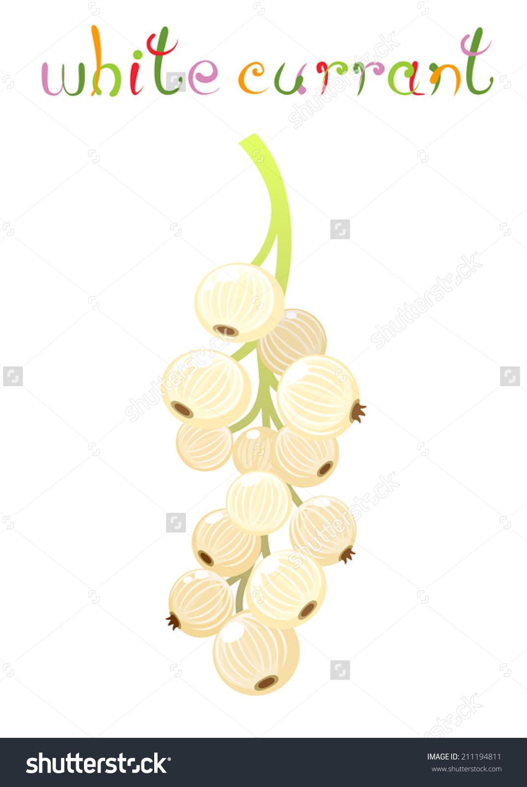 White Currant Berry. Illustration Of Brunch Fresh Ripe White.