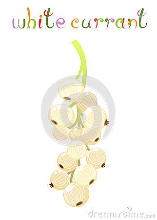 Ribes Aureum, Golden Currant Stock Photo.