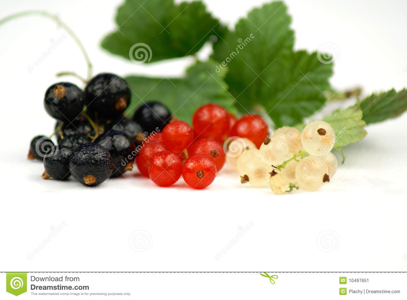 White Currant Fruit Royalty Free Stock Images.