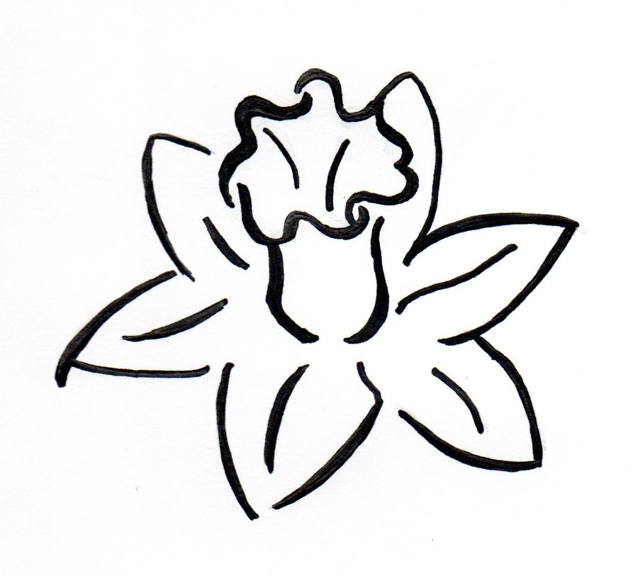 Daffodils Clipart.