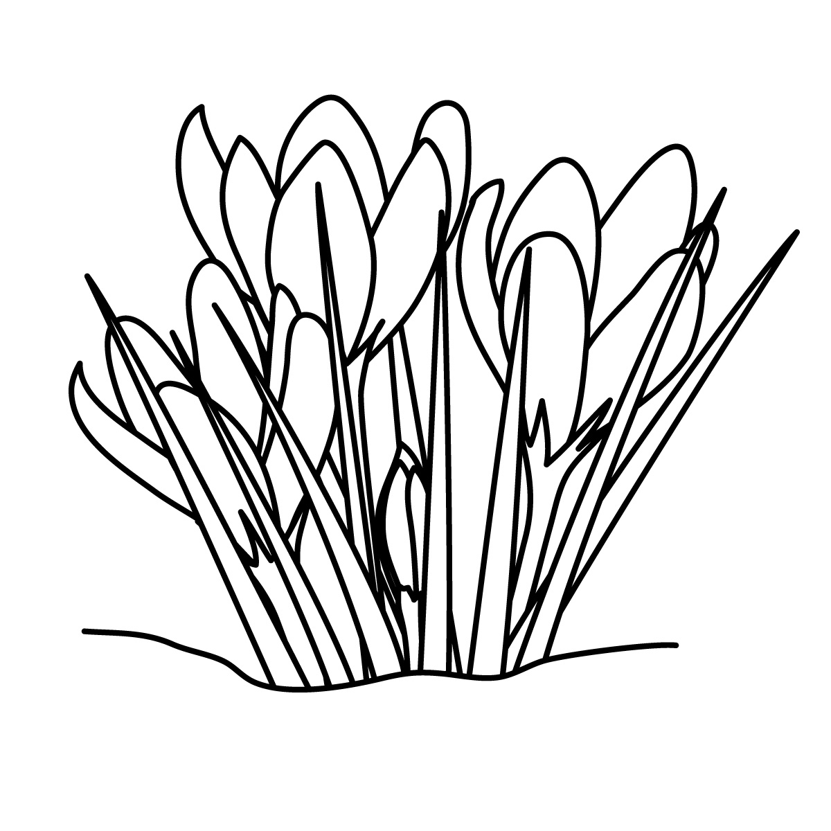Daffodil clipart black and white.