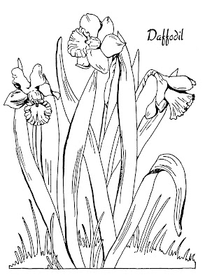 White daffodils clipart #10