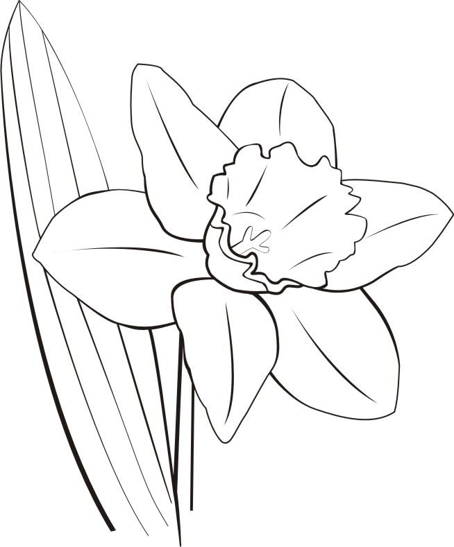 White daffodils clipart - Clipground