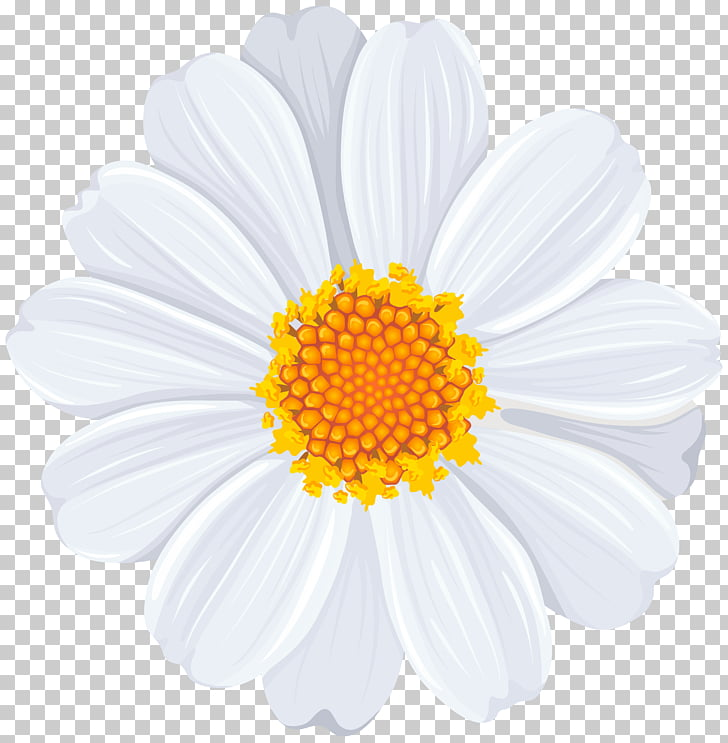 Common daisy , White Daisy Transparent , white and yellow.